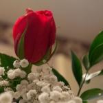 rosecard